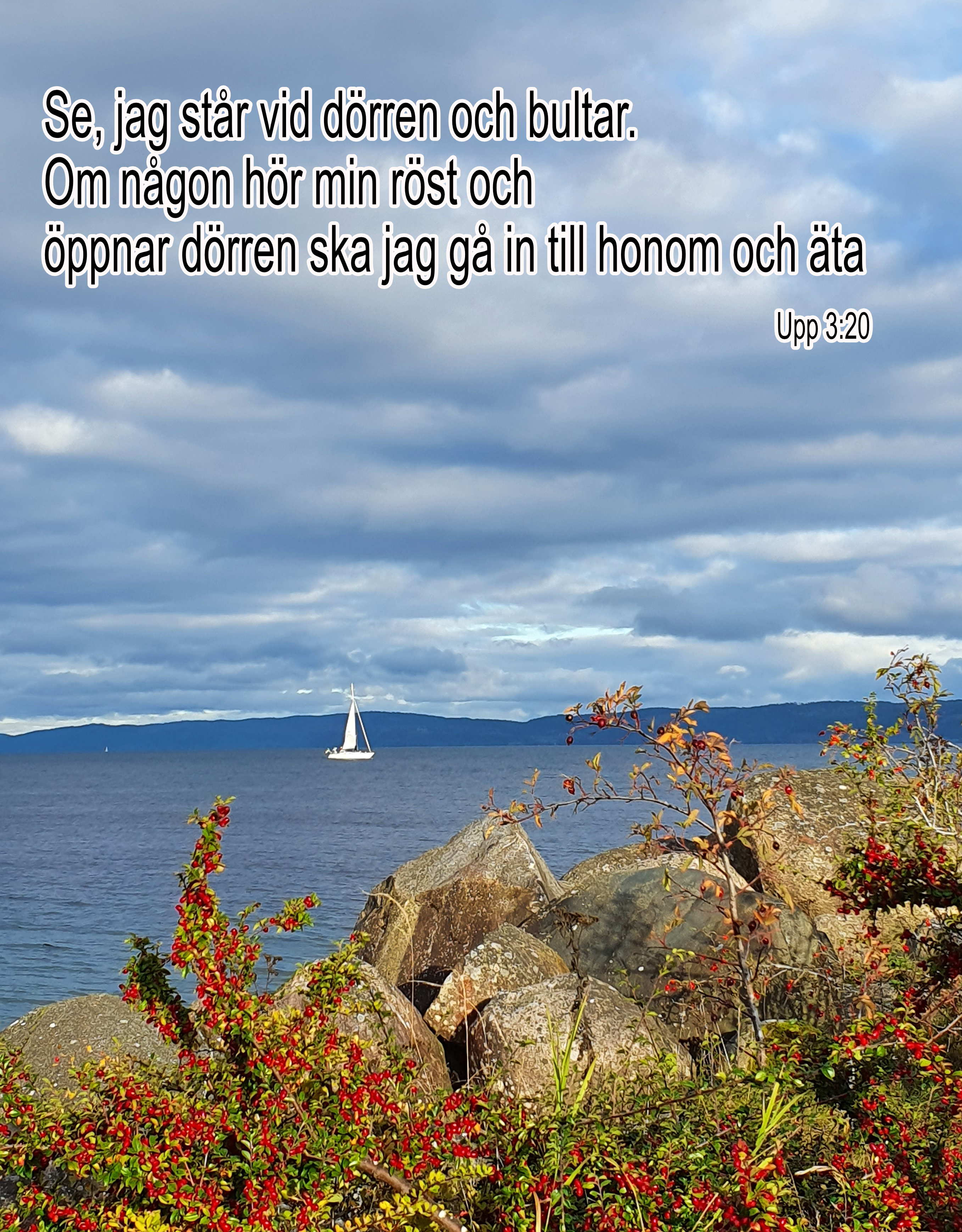 Segelbåt höstbladet nr 3 -21