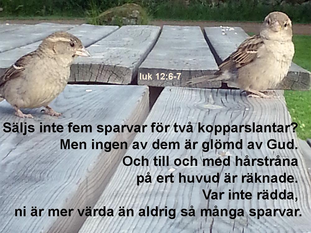 bibelbild-1844